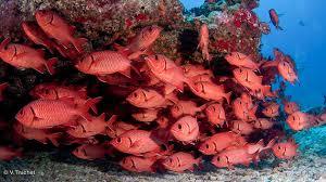 découvrir la faune marine